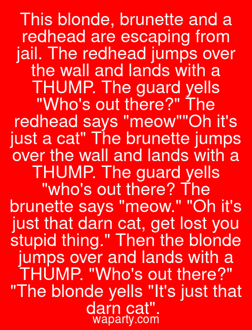 This blonde, brunette and a redhead are escaping from jail. The redhead jumps over the wall and lands with a THUMP. The guard yells Whos out there? The redhead says meowOh its just a cat The brunette jumps over the wall and lands with a THUMP. The guard yells whos out there? The brunette says meow. Oh its just that darn cat, get lost you stupid thing. Then the blonde jumps over and lands with a THUMP. Whos out there? The blonde yells Its just that darn cat.
