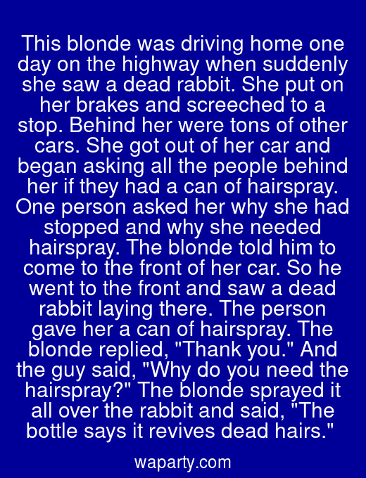 This blonde was driving home one day on the highway when suddenly she saw a dead rabbit. She put on her brakes and screeched to a stop. Behind her were tons of other cars. She got out of her car and began asking all the people behind her if they had a can of hairspray. One person asked her why she had stopped and why she needed hairspray. The blonde told him to come to the front of her car. So he went to the front and saw a dead rabbit laying there. The person gave her a can of hairspray. The blonde replied, Thank you. And the guy said, Why do you need the hairspray? The blonde sprayed it all over the rabbit and said, The bottle says it revives dead hairs.