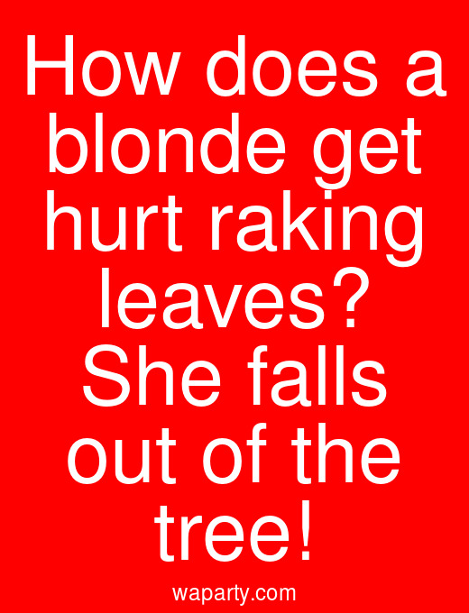 How does a blonde get hurt raking leaves? She falls out of the tree!
