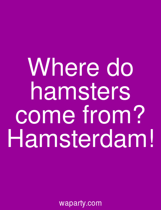 Where do hamsters come from? Hamsterdam!