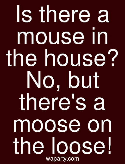 Is there a mouse in the house? No, but theres a moose on the loose!