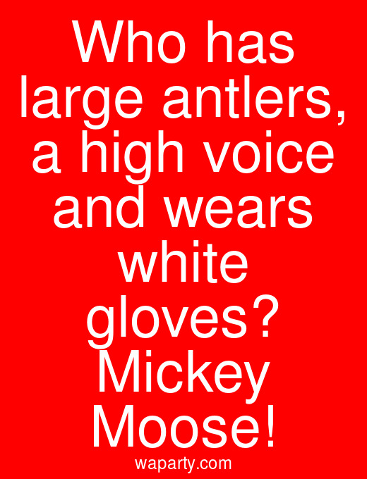 Who has large antlers, a high voice and wears white gloves? Mickey Moose!