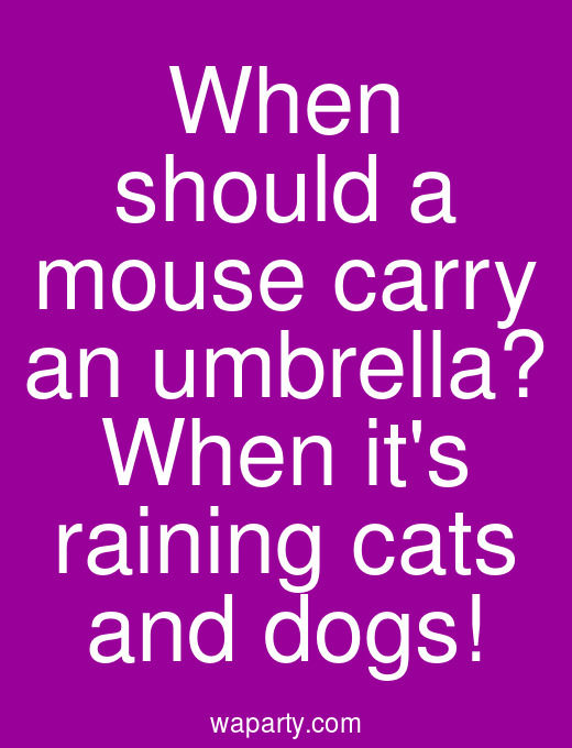 When should a mouse carry an umbrella? When its raining cats and dogs!