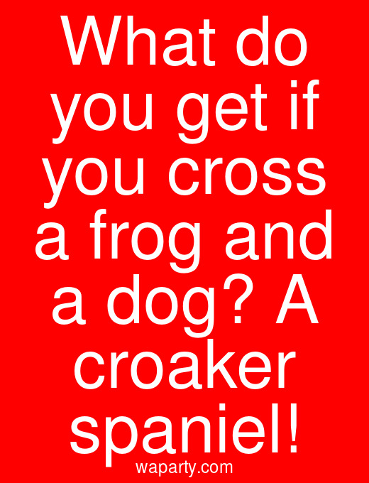 What do you get if you cross a frog and a dog? A croaker spaniel!