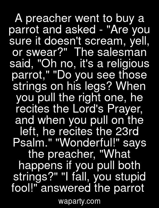 A preacher went to buy a parrot and asked - Are you sure it doesnt scream, yell, or swear?  The salesman said, Oh no, its a religious parrot, Do you see those strings on his legs? When you pull the right one, he recites the Lords Prayer, and when you pull on the left, he recites the 23rd Psalm. Wonderful! says the preacher, What happens if you pull both strings? I fall, you stupid fool! answered the parrot
