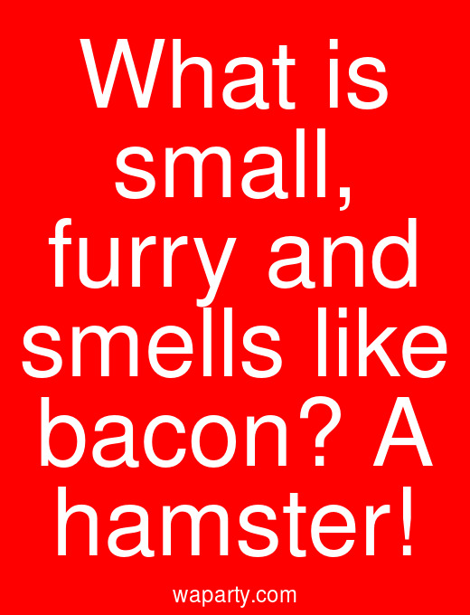 What is small, furry and smells like bacon? A hamster!