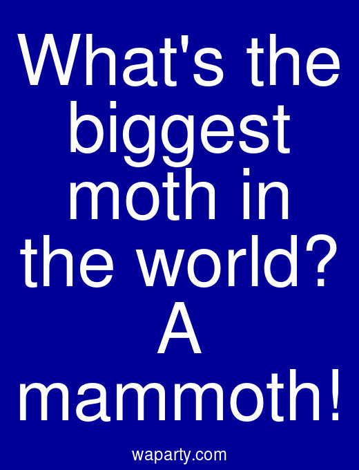 Whats the biggest moth in the world? A mammoth!