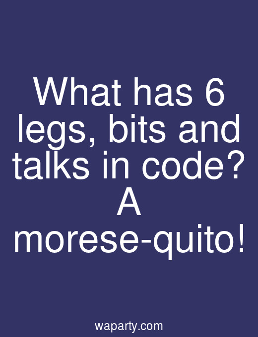 What has 6 legs, bits and talks in code? A morese-quito!