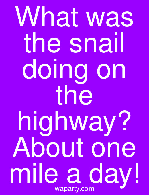 What was the snail doing on the highway? About one mile a day!
