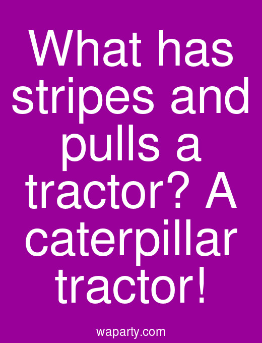 What has stripes and pulls a tractor? A caterpillar tractor!