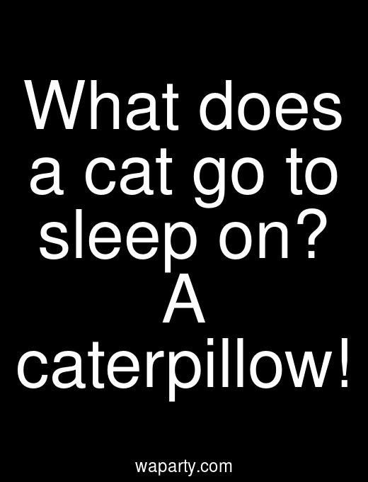 What does a cat go to sleep on? A caterpillow!