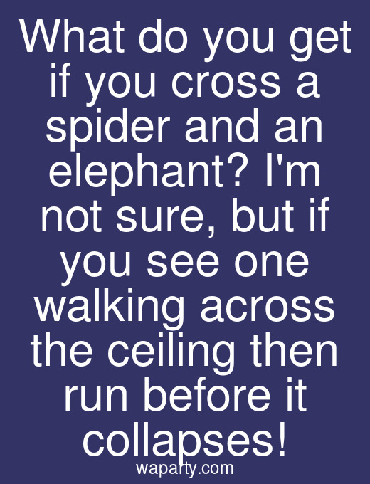 What do you get if you cross a spider and an elephant? Im not sure, but if you see one walking across the ceiling then run before it collapses!