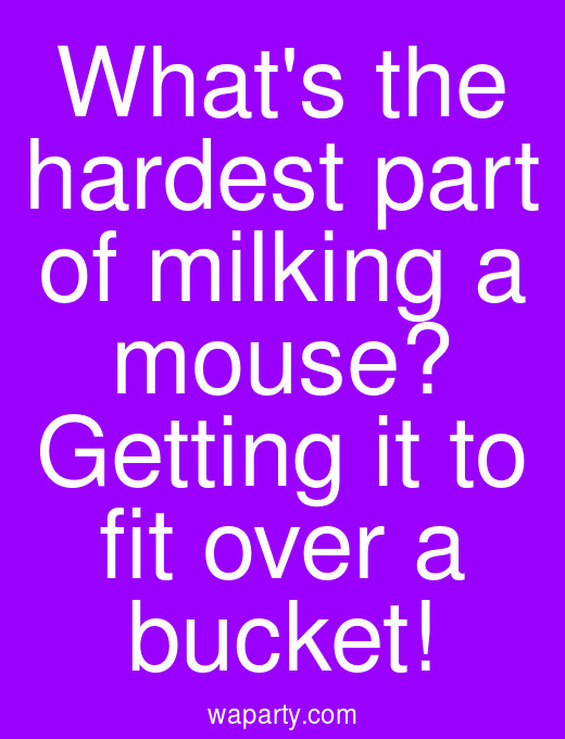 Whats the hardest part of milking a mouse? Getting it to fit over a bucket!