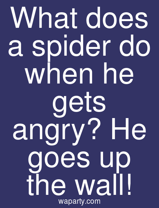What does a spider do when he gets angry? He goes up the wall!