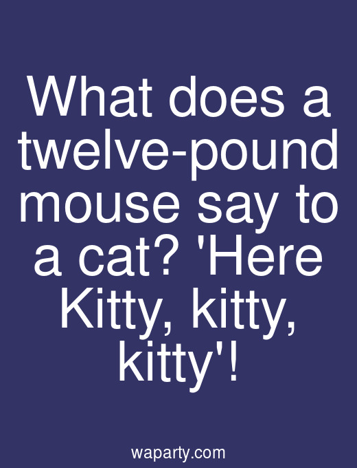 What does a twelve-pound mouse say to a cat? Here Kitty, kitty, kitty!