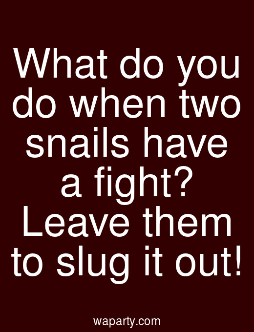 What do you do when two snails have a fight? Leave them to slug it out!