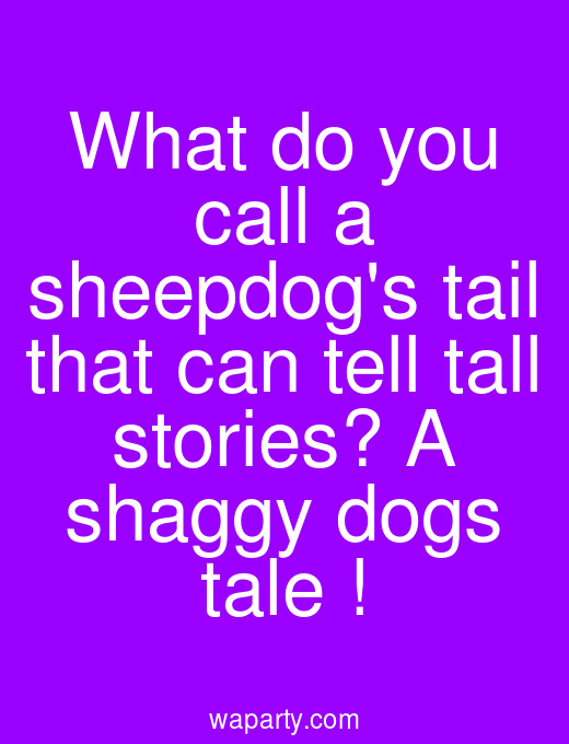 What do you call a sheepdogs tail that can tell tall stories? A shaggy dogs tale !