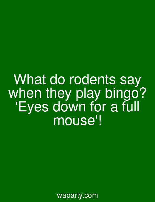 What do rodents say when they play bingo? Eyes down for a full mouse!