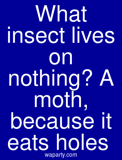What insect lives on nothing? A moth, because it eats holes