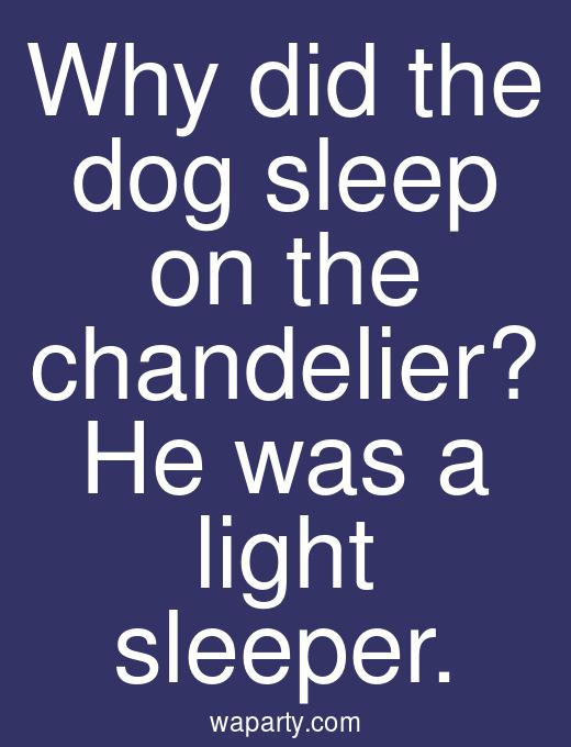 Why did the dog sleep on the chandelier? He was a light sleeper.