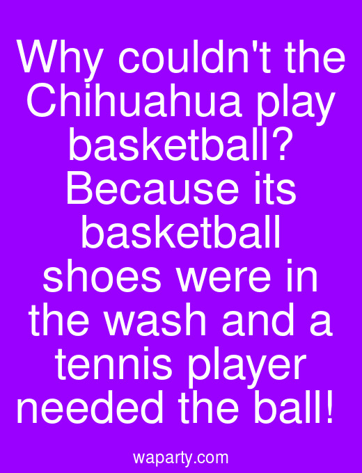 Why couldnt the Chihuahua play basketball? Because its basketball shoes were in the wash and a tennis player needed the ball!