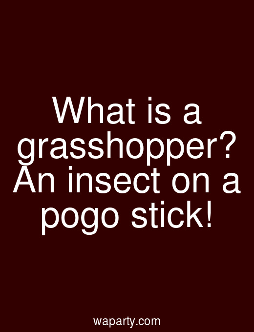 What is a grasshopper? An insect on a pogo stick!
