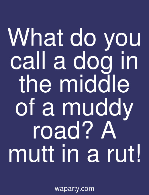 What do you call a dog in the middle of a muddy road? A mutt in a rut!